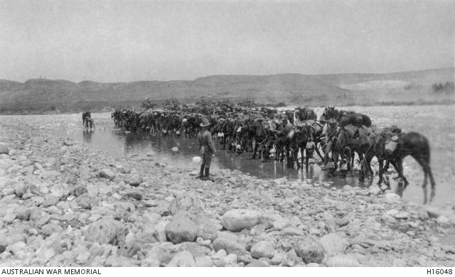 Esani, Palestine. c.1916 Light Horsemen watering their horses. H16048